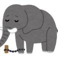 【朗報】象さん、牙目的で密猟されまくった結果牙が生えない方向に進化WIWIWIWIWIWIW