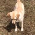 犬と「フリスビー」で遊んでみた。ほら、取ってこい! → 犬は間違えていたようです…
