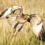 『ベランダにいたうるさい鳥にタカの鳴き声を聞かせた結果』の画像