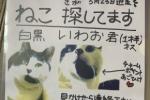 猫のいわお君(白黒、1歳半のオス)が交野市南星台で逃走。飼い主さん探されています。