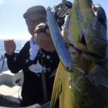 『最近の釣り(クロダイ、シイラ、シーバス、タコ)』の画像