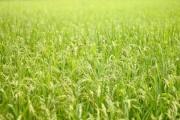 環境を保ちつつ農業の生産性を上げよう!~東京大学 農地環境工学研究室の紹介~