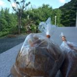 『手作り味噌のおいしさにやられている件』の画像