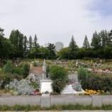 『靭公園のバラ園に5月末に行ってまいりました。』の画像