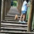 子イヌが「アスレチック」に挑戦する。こんなもの余裕だワ~ン♪ → こうなる…