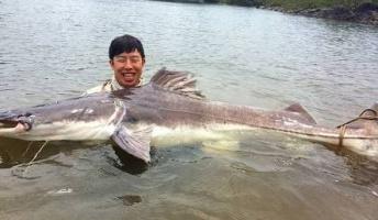 世界の巨大淡水魚を紹介したい(画像あり)