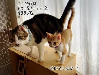 子猫の記憶力は私より良い。