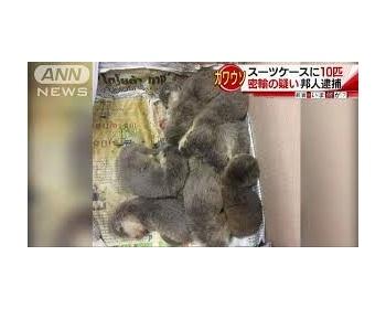 日本の女子大生、タイのカワウソを密輸しようとして拘束される タイで3400円が日本ではペットとして人気で値段は100万円以上(画像あり)