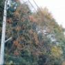 リアル日本昔話!? 京都の山で見たものは? & スマホカメラ講座でした