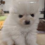 ペットショップ ワンラブ Coaska Bayside横須賀店のスタッフブログ