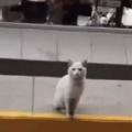 野良ネコが店の前で待っていた。これ買って♪ → 猫好きは断れません…