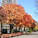 市電と紅葉 しばらく休みます