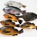 『国東の食環境(304)小魚』の画像