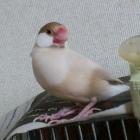 『鳥さんたち全員紹介』の画像