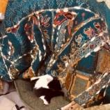 『17歳の猫そらも一緒に旅していますー。』の画像