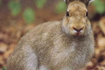 ウサギの意思表示と生態について