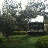 『富有柿の原木を、訪ねる。』の画像
