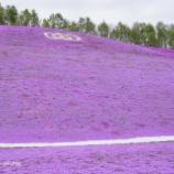 『紫の絨毯Purple carpet.』の画像