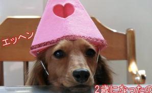 愛犬の誕生日に「似顔絵ケーキ」