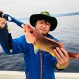 『高知沖で高級魚祭りだ #ネトウヨ安寧』の画像