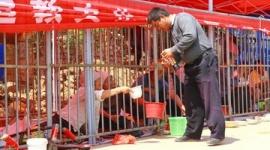 【中国】物乞い100人を檻の中に閉じ込め、観光客の安全を確保…宮観西山万寿宮