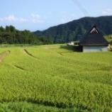 『ただいま稲の登熟期です』の画像