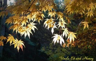『晩秋 里山の黄葉』の画像