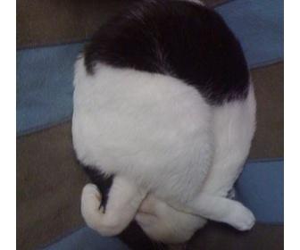 【猫画像注意!】白黒祭り。iphoneで撮った猫IV
