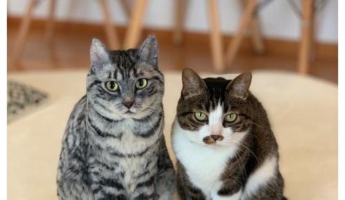 日本人が作った実物大羊毛フェルト猫が超リアルすぎると海外でも話題に