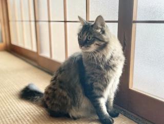 【猫写真】おててバッテンや変な座り方をする猫たち
