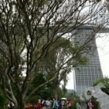 『新・植物園』の画像