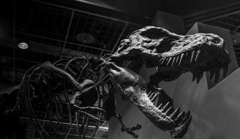 恐竜の鳴き声はどんな声だったか?ハトのような「クークー」声だった可能性