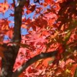 『「せせらぎ街道」の紅葉はまだまだ・・・10月16日撮影』の画像