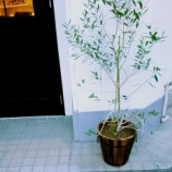 『植木の引っ越し』の画像