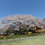 『4月の花①』の画像