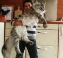 人間は猫を「大きい猫」と認識してるらしい