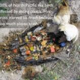 『深刻な未来:海鳥がプラスチックを食べる理由』の画像