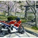 『春の息吹(VF1000R)』の画像