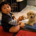 【ほんわか動画】 ゴールデンレトリーバー 子犬と人間の赤ちゃん