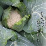 『花椰菜』の画像