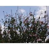 『花、ほころび。』の画像