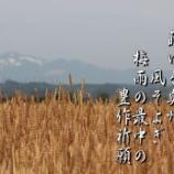『去年草』の画像