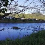 友釣り日記(長良川、根尾川、馬瀬川、益田川など)