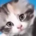 子ネコを「お風呂」に入れてみた。へそ天でプカプカ~♪ → 漂う毛だまはこんな感じ…