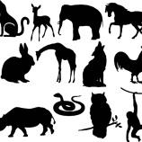 『動物の名前と糖尿病管理』の画像
