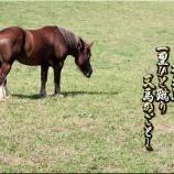 『馬の尻尾』の画像