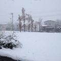 雪の便りが…