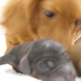 『犬猫が子供のアレルギーを予防する』の画像