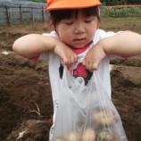 『ジャガイモ掘り』の画像