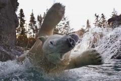 【画像あり】クマのはしゃぎっぷりが尋常じゃない件